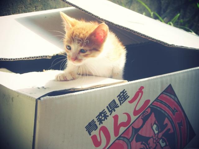 動物病院の料金はどのくらい?捨て猫を拾ったときの対処法