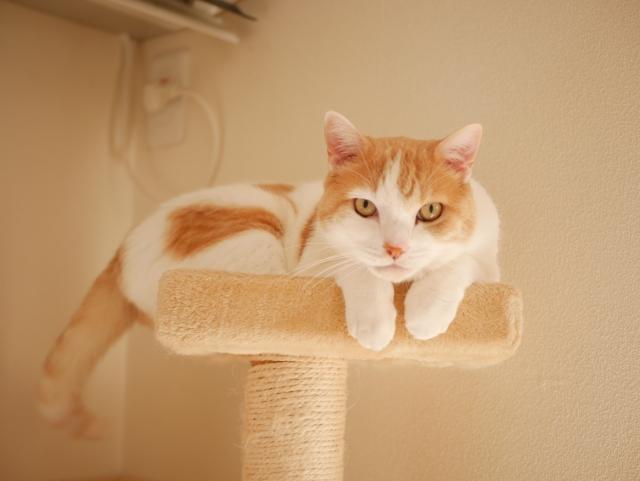 猫の匂い袋の正体と対処法は?