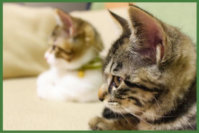 動物病院で避妊手術。料金は?捨て猫の場合支払うのは誰?