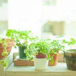 観葉植物を初心者が育てるときのオススメ種類&アイテム!