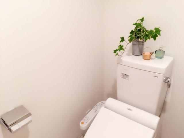 窓のないトイレで上手に観葉植物を育てる方法と対処法!