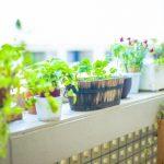 観葉植物でおしゃれな部屋に!初心者でも始めやすい?