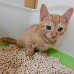 猫がトイレを失敗してしまう原因とは?