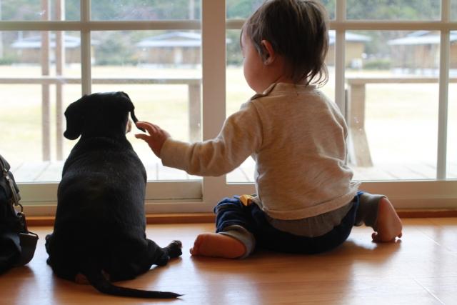 犬と人間の関係性は?子どもがいる家庭で飼っても大丈夫?