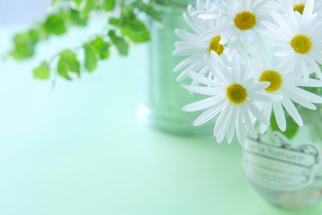 室内で花を種から上手に育てる方法と気をつけるポイント !