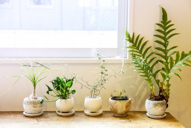 ちょっと変わった観葉植物10選!珍しい特徴と上手な育て方